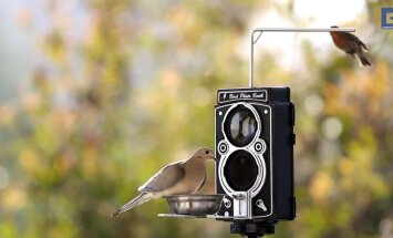 VIDEO: Hingematvad kaadrid lindudest, mille peidukaamera kinni püüdis!