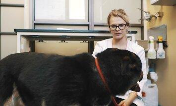 Õpetlik video: kuidas koeral hambaid pesta?