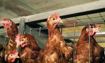 Taani suurimad jaeketid lõpetavad puurikanade munade müümise