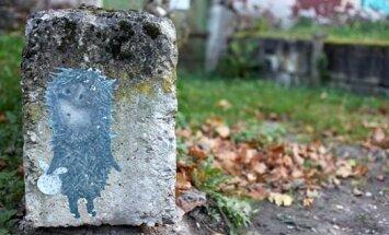 PÄEVAPILT: Vahva siilike kivil