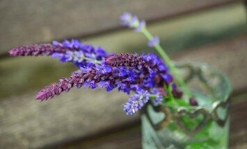 NIPP: Kuidas hoolitseda taimede õiterohkuse eest?
