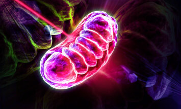 Murrang teaduses: Laserisähvatus avab parandatud mitokondrile tee rakku