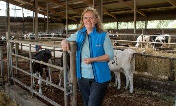 Tiina Roosalu on edukalt aretanud OÜ Nigula Piima karja ning kinnitab, et nende loomi maha ei müüda.