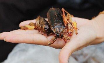 Заморить червячка: 5 самых шокирующих блюд Таиланда