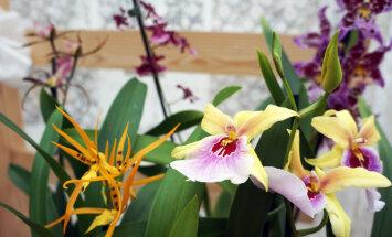 Смотри, кто выиграл изумительную орхидею и билеты на выставку