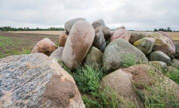 Kuidas kartulivao vahel olev kivi algul labidaga, siis traktoriga välja kaevati