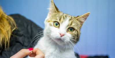 KODULEIDJA: Sõbralik ja sotsiaalne kassineiu Kelli otsib kodu