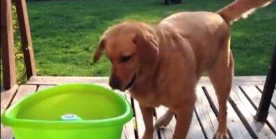 Humoorikas VIDEO: Kuidas suvel oma koerale tundideks mängulusti pakkuda?