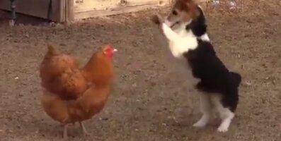 Naljakas VIDEO: Suures maadlushoos olevaid sõpru tülitab üks hetk ootamatu asjaajaja, kes korra majja lööb