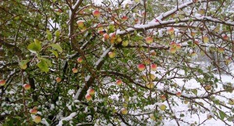 ФОТО читателей Delfi: прогноз не обманул. Выпал первый снег