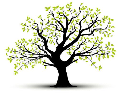 TEST   Vali puu ja saa teada, milline on sinu iseloomu põhiolemus