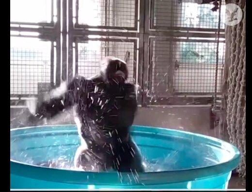 VIDEO   Vahval ahvil on nii head tantsuliigutused, mis teevad silmad ette nii mõnelegi