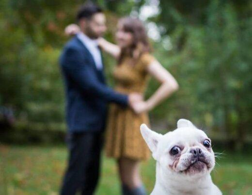 Naerutav GALERII: 20 koera, kes rikkusid ideaalse pildi