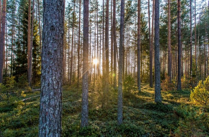 Roheline loodus Võrumaal jõulude ajal