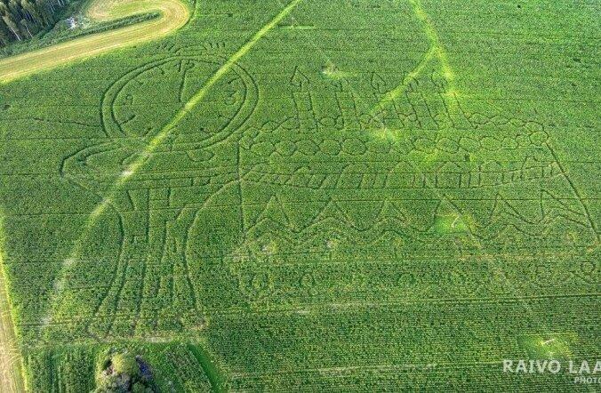 PÄEVAPILT: Maisipõllule kasvatati tordikujuline labürint