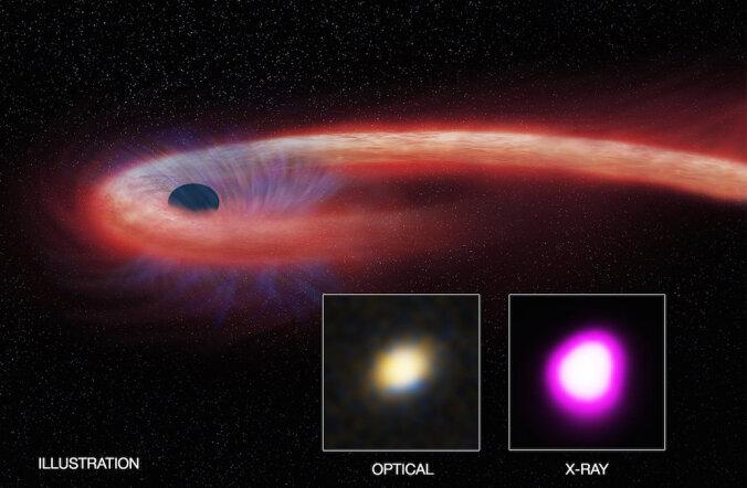 Must auk maiustas alla neelatud tähega erakordselt kaua