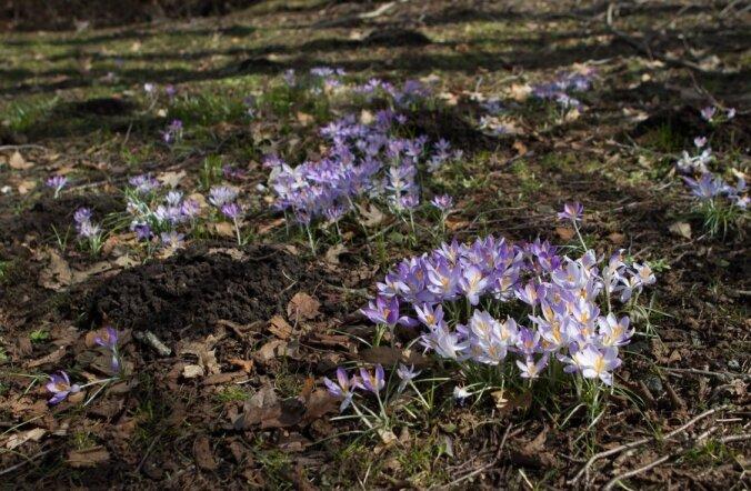 Viimaks ometi! Nädala teiseks pooleks lubatakse sooja kevadilma