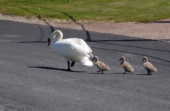 Luigeema juhib oma pere üle sõidutee.