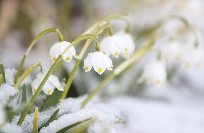 ФОТО DELFI: Зима напомнила о себе в последний день марта