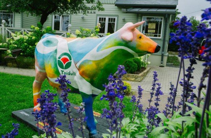 Toiduliidu piimalehm jõuab reedel Narva