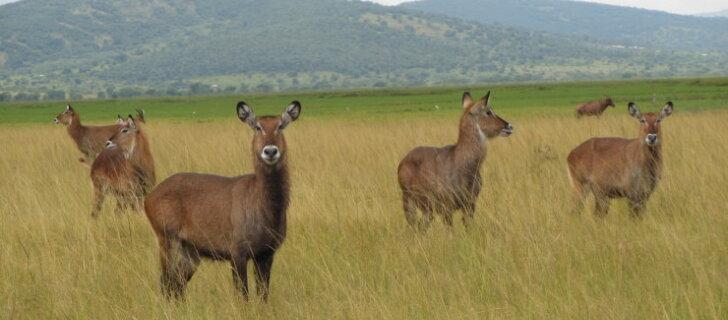 Rwanda ja Uganda,