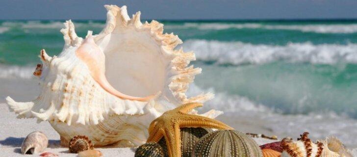 Тюрьма или 2500 евро штрафа: туристы в Таиланде поплатились за сбор кораллов