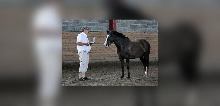 Eesti hobuse aretajatel on tööd kuhjaga