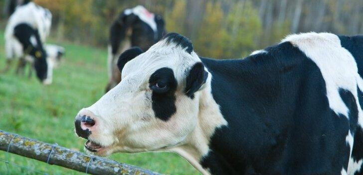 EL liikmesriikide ajakirjanikud külastavad Viljandimaa põllumehi