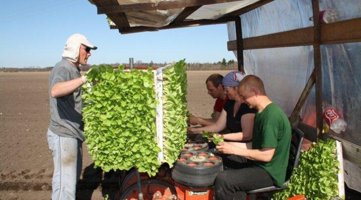 Kadarbiku köögiviljaimpeeriumi haare ulatub porgandimahlast piirituseni