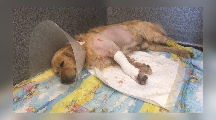Šokeeriv lugu: Kas sa mäletad Brayanit, kes vaevles tundmatu tervisehäda käes ja vajas ellu jäämiseks iga loomasõbra toetust? Kuidas tal läheb?