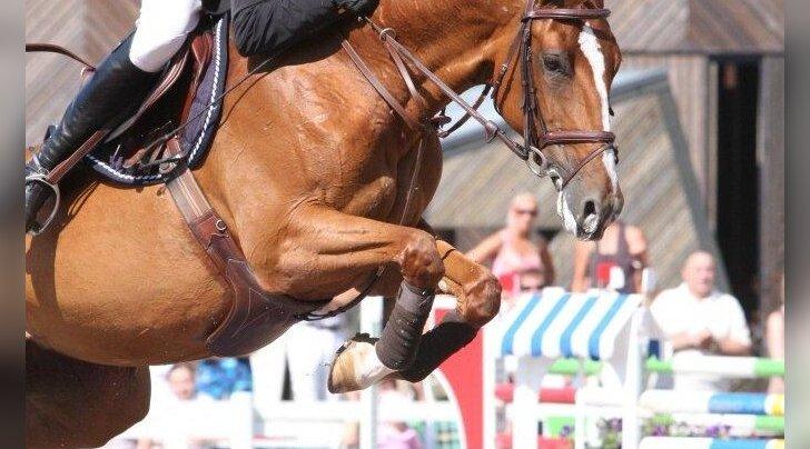 Eesti sporthobune jõudis Grand Prix tasemele