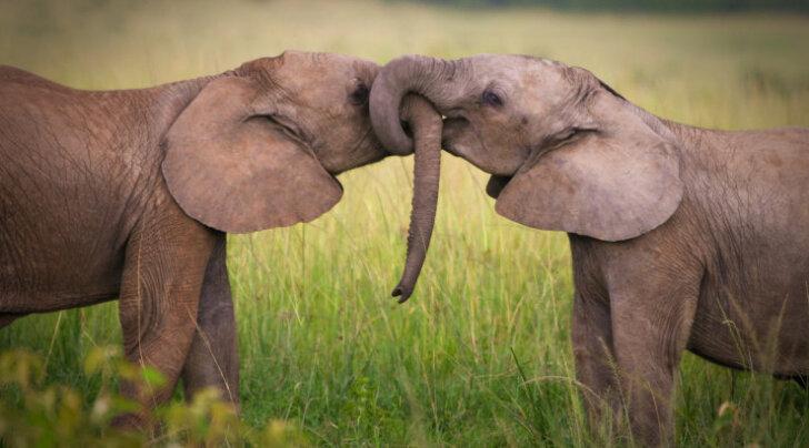 Intrigeeriv test: kas oled äsja armunud või püsivas suhtes? Vaata, millist looma sinu suhe meenutab