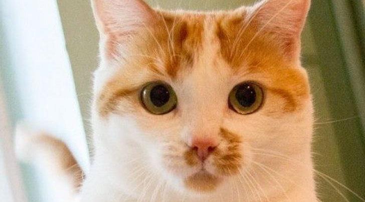 OTSIB KODU: Pika ja kurva ajalooga kass Rõžulja igatseb jõuluks koju kuuse alla