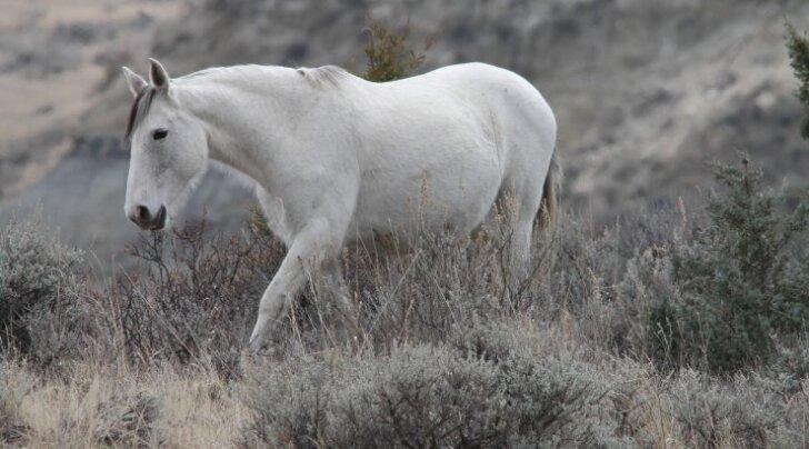 Südamlik sõprusside: Hobune ja dobermann käivad kokku nagu sukk ja saabas