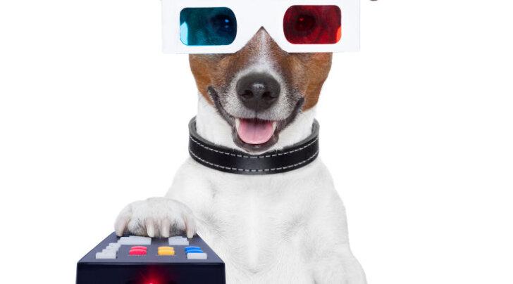 Sinu koer pöörab vahel pea viltu, kui ta telerist midagi kuuleb? Vaata, mida ta sellel hetkel näeb ja tunneb.