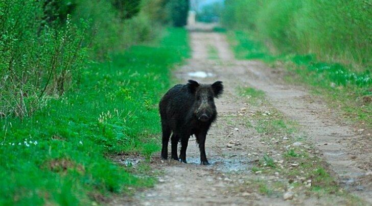 DELFI GRAAFIK: Vaata, milliseid loomi kütiti mullu kõige enam!
