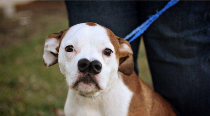 FOTOD: Ainulaadne kahe ninaga koer otsib armastavat perekonda