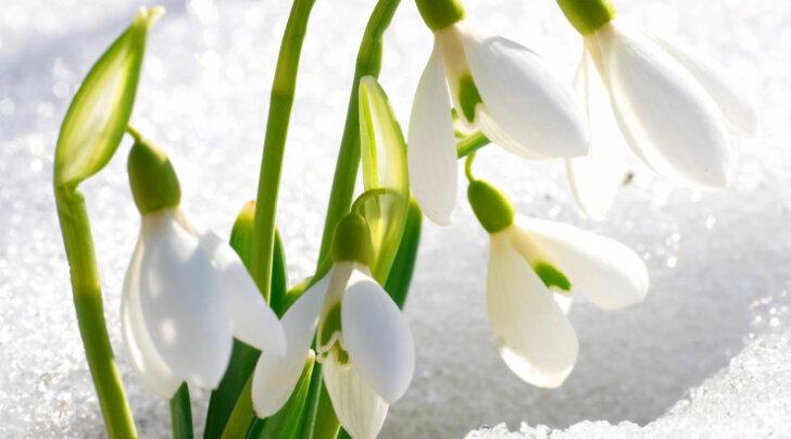 Rahvatarkust: vanarahva traditsioonid ja uskumused märtsikuu kohta