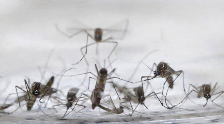 WHO: Euroopa riigid peavad kohe Zika viiruse levikuks valmistuma hakkama