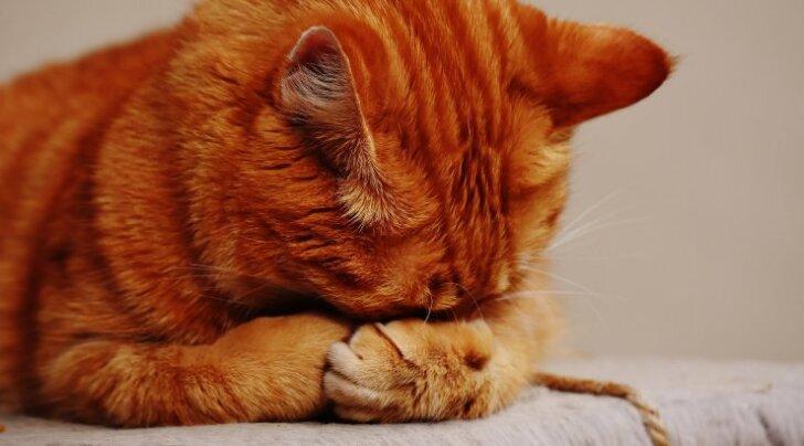 Kohtla-Järve tänavalt leiti verine ja läbikülmunud kassipoeg samasuguses pappkarbis, milles ta hiljuti uuele omanikule anti