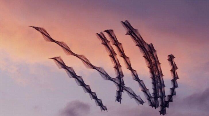FOTOD: Hämmastavad kaadrid lindude omapärasest lennuteest