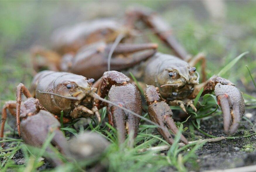 ÕPETUS: Kui kaua säilivad erinevad lihad ja mereannid sügavkülmas?