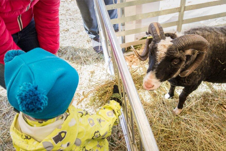 Lapsed ja loomad Maamessil 2016