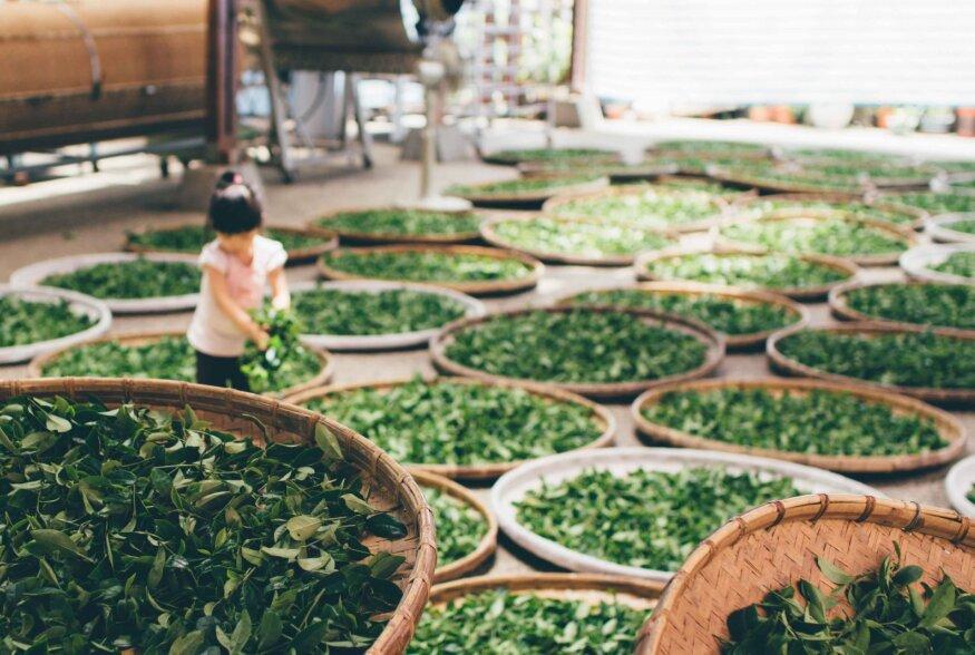 TEEKOOL | Roheline tee kui puhas tervis