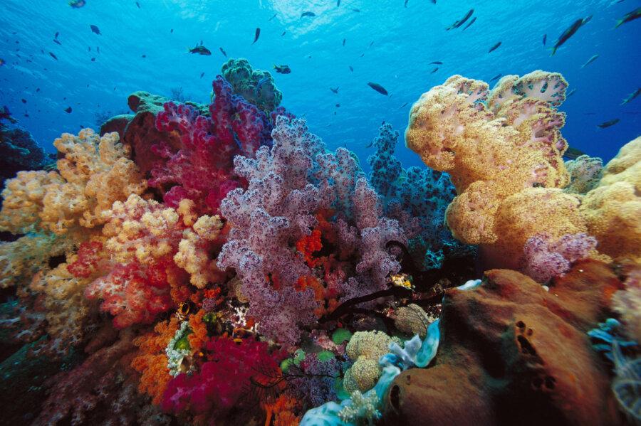 Картинки по запросу коралловый риф
