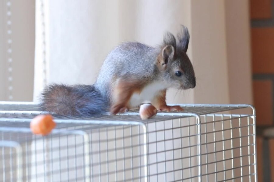 VIDEO | Oravapojad kosuvad jõudsalt: mida teha, kui leian maast õnnetu ja abivajava poja?