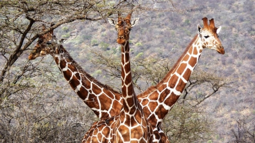 Tony Murtagh