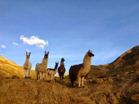 Matkareis Boliivias. Inkade rada mööda Amazonase džunglist Altiplano mägismaale
